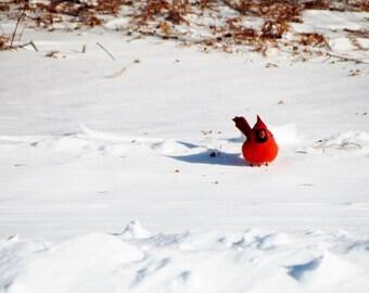 "Redbird in the Snow - 8x10 Matte Print on 3/16"" Foamcore"