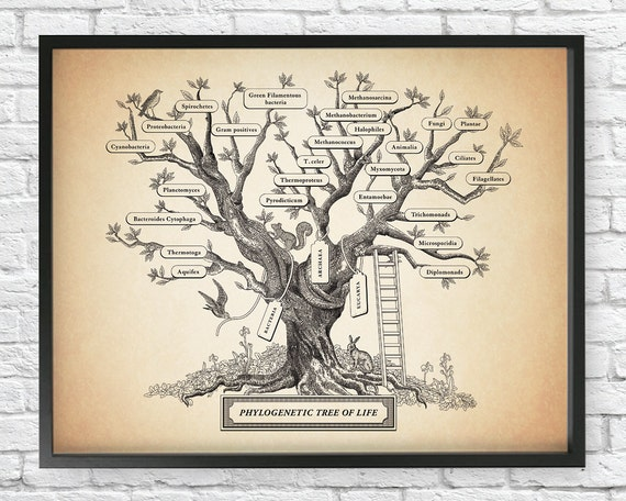 Microbiology Phylogenetic Tree Of Life Poster by ...