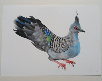 Australian Crested Pigeon Illustration Giclee Print, A4