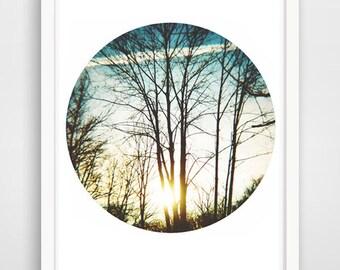 Trees-  Printable Art, Downloadable Photo, Wall Print, Home Decor