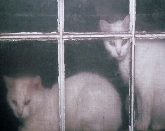White Cats in Window Fine Art Photography Wall Photo Print, Old Wooden Window Panes Cat Kittens Cute Feline Animal Pet