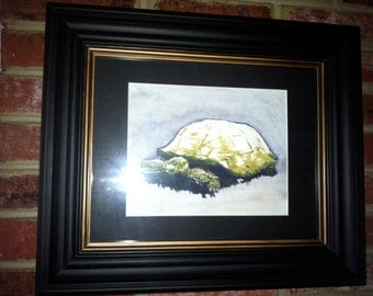 Tortoise Watercolor Painting 9x12 Original
