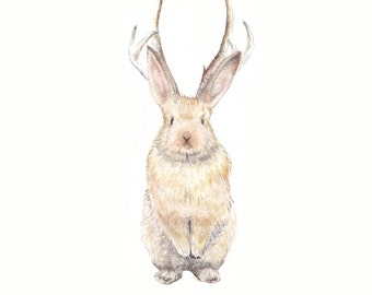 Jackalope Limited Edition Print 8.5x11 Watercolor