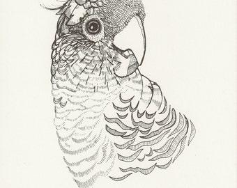 Illustrated Bird Print