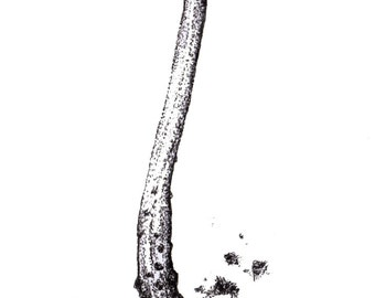 Stippled Ink Mushroom Study Print