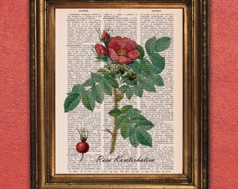 Dictionary Page Print: Wild Botanicals, Rosa Kamtschatica, Vintage Dictionary Art Print, Wall Decor, Mixed Media ZRP9013