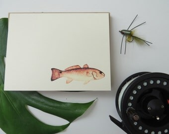 Spottail Bass Stationery - Set of 12 Folded Correspondence Cards