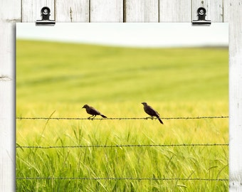 """nature photography, large wall art, art photography, photography prints, nature prints, canvas wall art, green, yellow - """"Two in the Barley"""""""