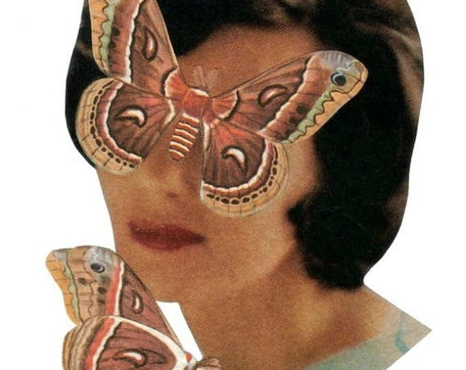 Moth Art, Nature Theme Artwork, Insect Collage