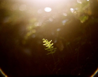 Alone  -  5x7 original inspirational film art photograph of sun flare over golden sunlit fern in the woods. Spiritual, mystic photography