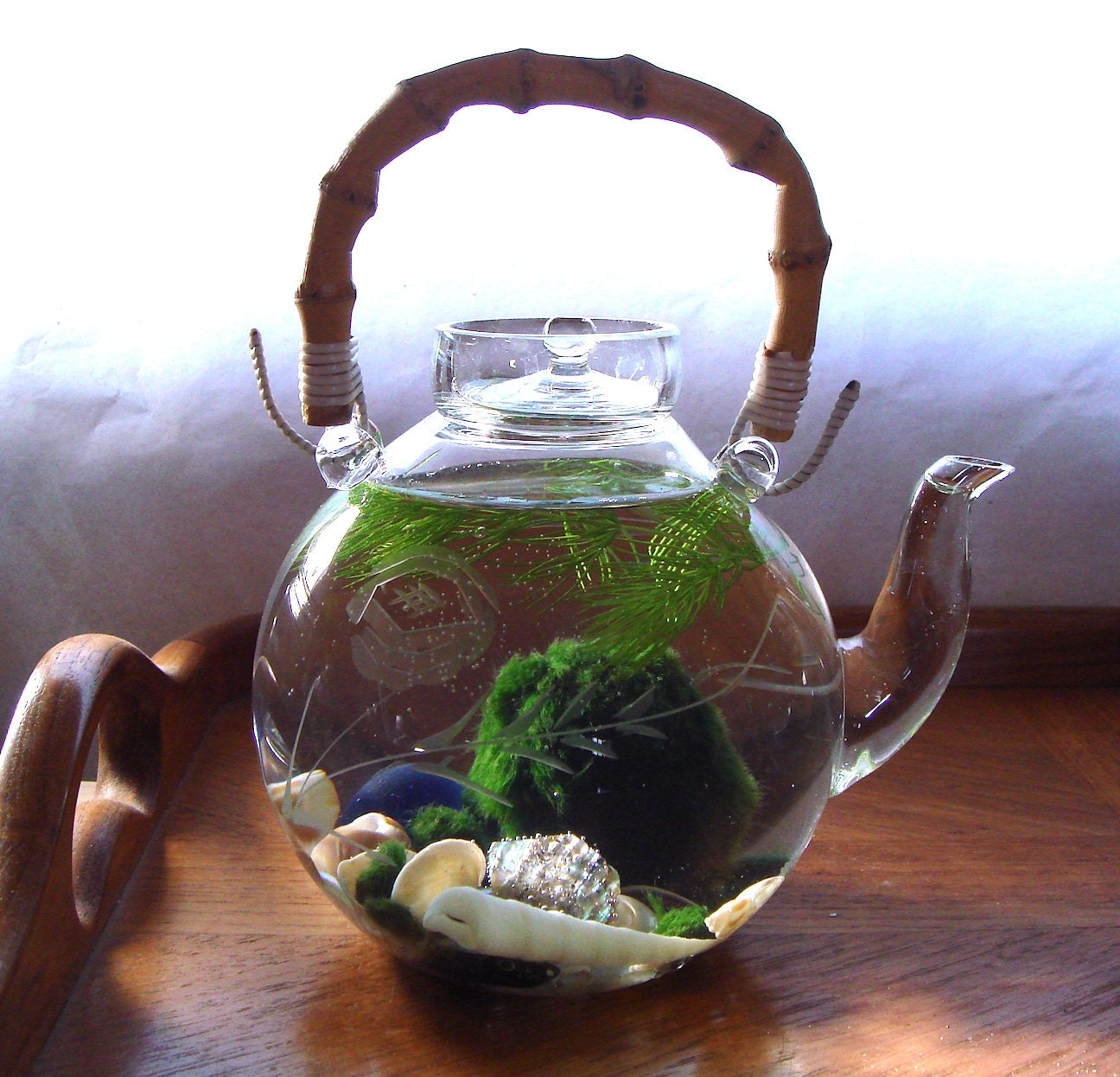 SALE Bamboo Etched Glass Teapot Green Tea Marimo