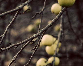 apple orchard trees woods woodland landscape photography nature home decor office decor