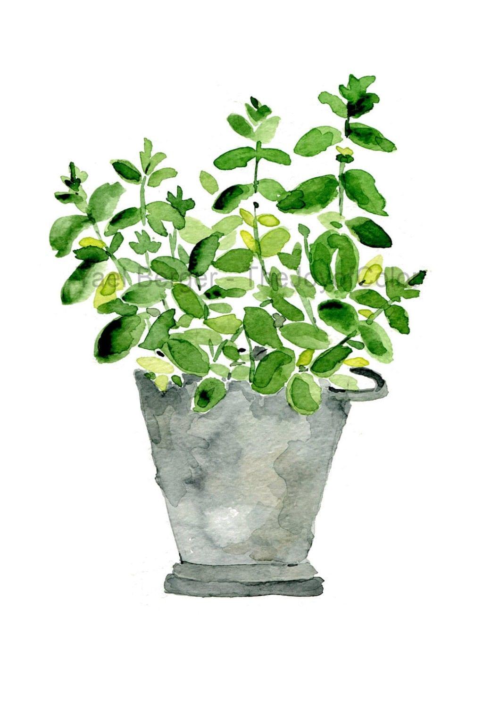 Mint Plant Art Print Mint In A Tin Planter Kitchen Art Herb