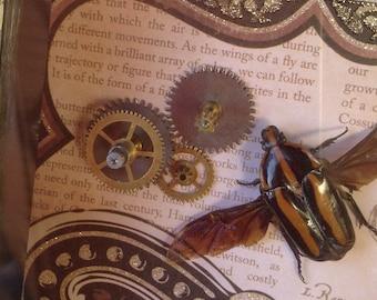 Broken Poet - Real Beetle - Clerota rigifica