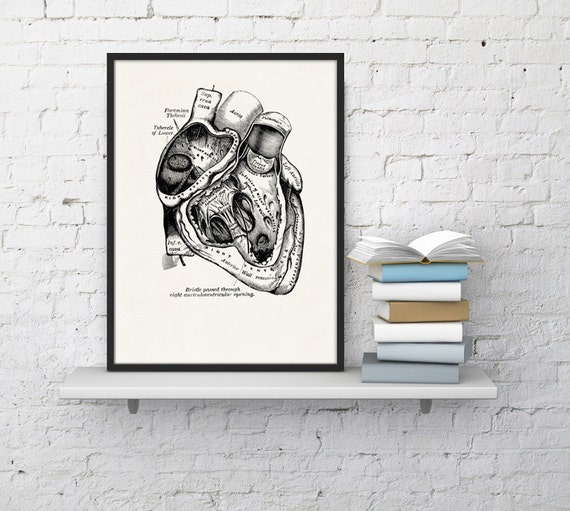 Spring Sale Wall art print Human Heart in black Science prints wall art Anatomy prints wall decor Gift, Love gift, giclee art WSK02