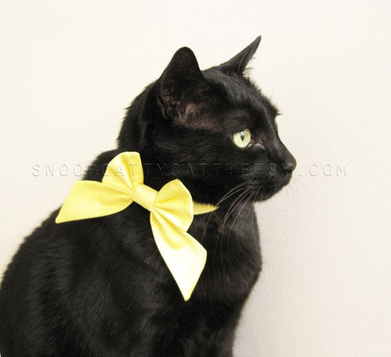 Lady Cat Bow - More Colors