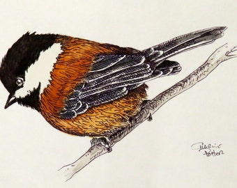 Chestnut-backed Chickadee - Watercolor and ink original
