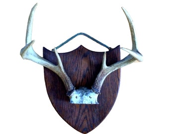 Antler Rack on Shield Style Plaque