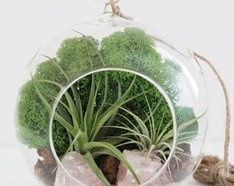Rose Quartz Air Plant Terrarium Kit Green Reindeer Moss || Large Round with Two Plants
