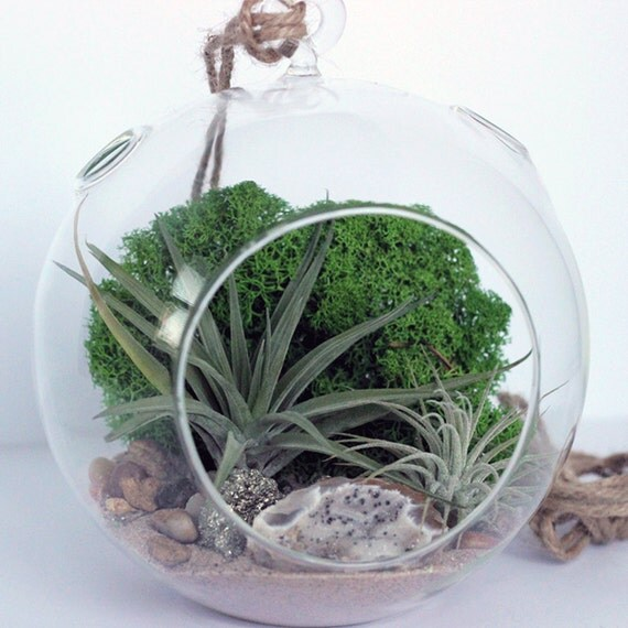 Geode and Pyrite Air Plant Terrarium Kit with Green Moss