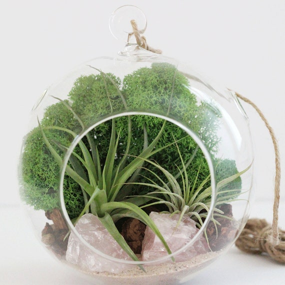 Rose Quartz Air Plant Terrarium Kit Green Reindeer Moss || Large Round with Two Plants