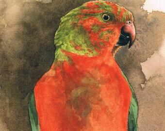 Australian King Parrot Square Greeting Card