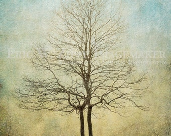 Tree Photography, Two Trees Growing Together In Unity, Blue And Beige Art, Wedding Gift Art, Landscape Photography Of Two Bare Trees