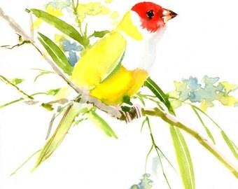 Bird painting, gouldian finch, original watercolor bird painting, 10 x 8 in