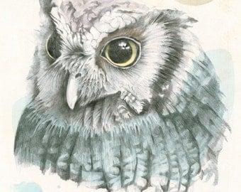 Owl Art Print - Hand Drawn Owl, Original Artwork, Owl Illustration, Owl Decor, Nursery Wall Art, Archival Print, Wildlife Art Print