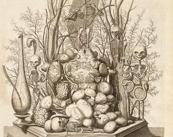"Frederik Ruysch : ""Ad Vivum Sculpsit"" (1721) - Giclee Fine Art Print"