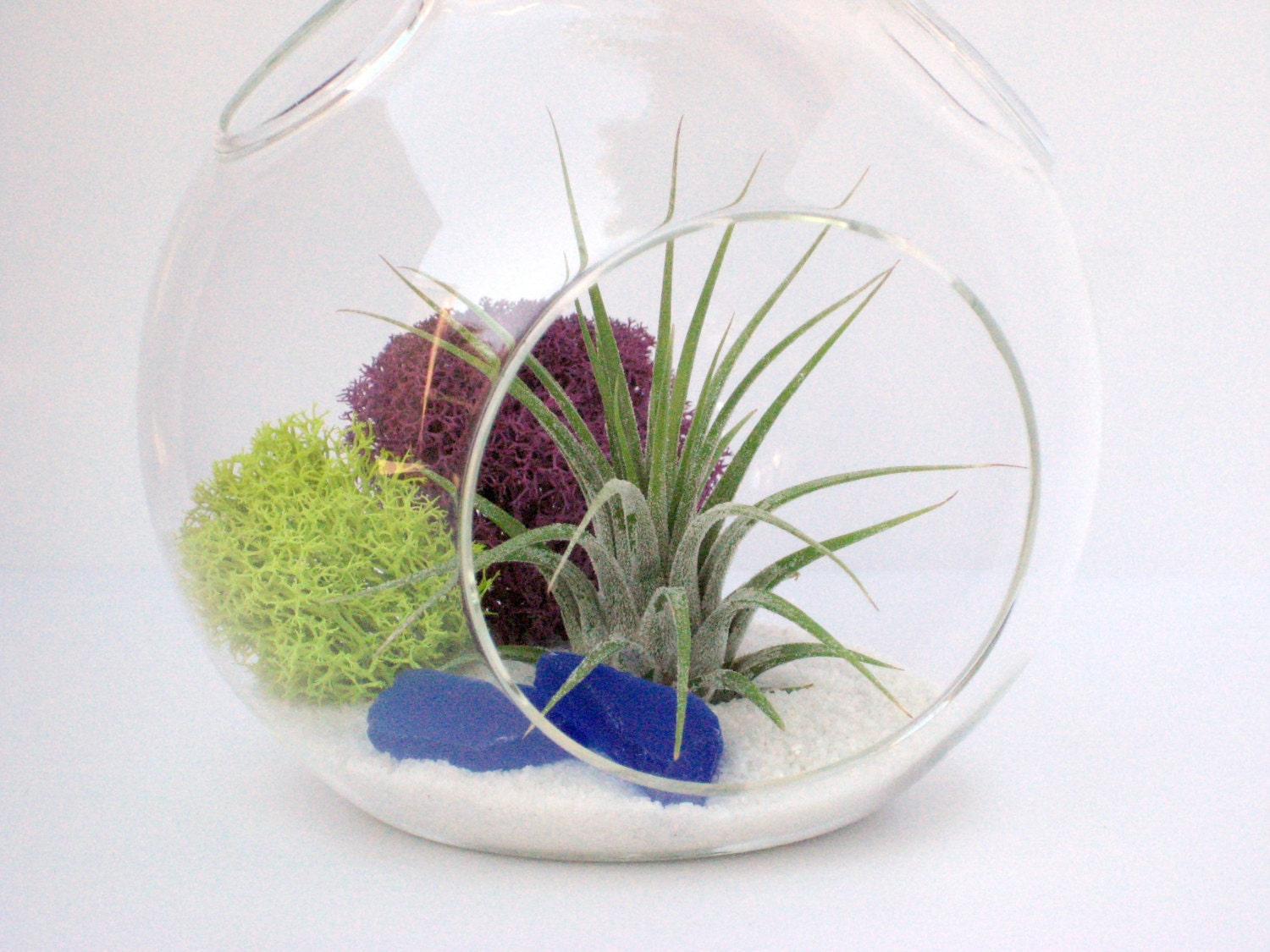 terrarium kit bold colors air plant in hanging by williamsgrove. Black Bedroom Furniture Sets. Home Design Ideas