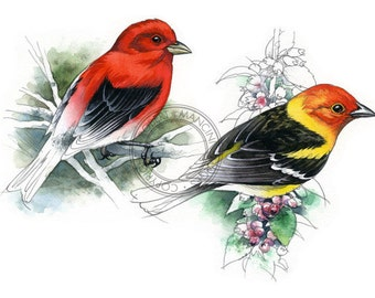 Tanagers, Scarlet and Western - bird art, wildlife art - nature print of original artwork