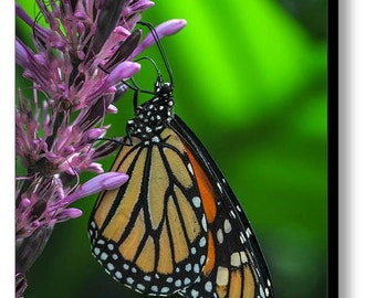 Monarch Butterfly Photograph on canvas