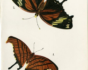 1896 Butterfly Prints Monarch Butterflies Lepidoptera  Lloyd's Natural History Print