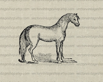 Horse Vector Clipart Instant Download, Pony Farm Animal Mare Stallion Clip Art Antique Drawing, Victorian Illustration jpg png eps WEB1744AT