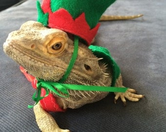 Elf Costume for Bearded Dragons! One size fits most.