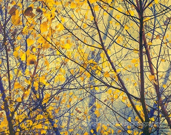 Tree photography, yellow leaves print, autumn photo, fall print, nature photo, woodland print, fog, misty, surreal, home decor, wall art