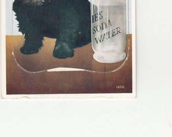 "Five Star Scotch Terrier,Tartan Bow, Pull Out Views ""A Scotch And Splash From Seaton"" Postcard"
