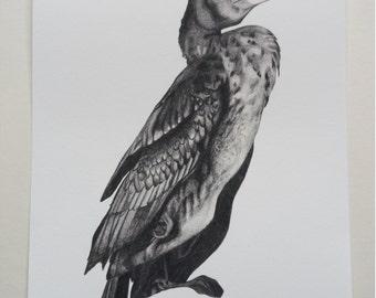 Cormorant Illustration Giclee Print, A4