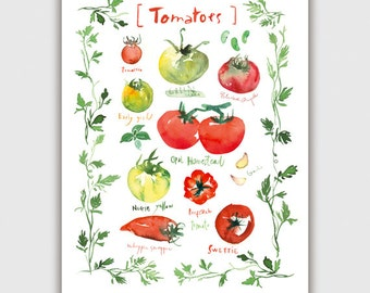 Tomato print, Heirloom tomatoes, Kitchen gift, Vegetable poster, Kitchen print, Watercolor print, Home décor, Food art, Vegetable painting