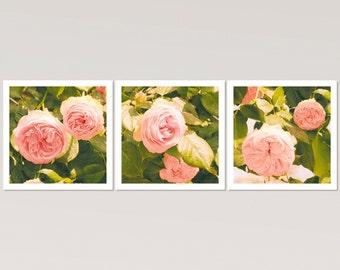 Set of three prints, Roses photography, pink flowers, botanical print set, bedroom art, set of 3 prints, square art, 10x10, 12x12 art