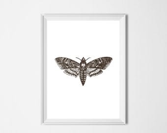 Moth Print, INSTANT DOWNLOAD, Vintage Printable Art, Minimalist Decor, Brown Wall Art, Nursery Decor Office Print, Vintage Moth Illustration