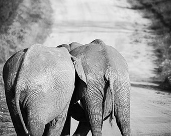 Kenya Photography, Kenya, Safari, Elephant, Baby Elephant, Fun, Playful, Wall Art