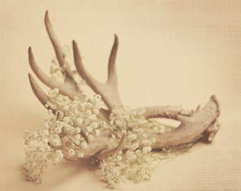 Antlers and baby's breath, fine art photography, home decor
