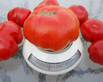 Lehrertomate Organic Tomato Seeds- Rare German Variety- 20+ 2015 Seeds