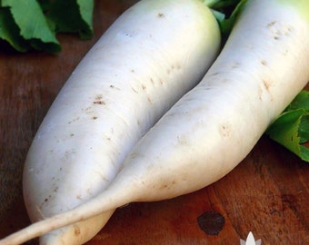 Japanese Minowase Daikon Radish Heirloom Seeds - Non-GMO, Open Pollinated, Untreated