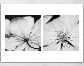 Photo print - Clematis