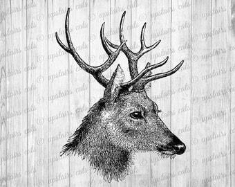 Vintage Deer Head Graphics Clipart - Digital Antique Graphics Printable Image - Clipart - Instant Digital Download
