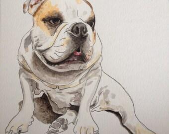 English Bulldog Watercolour