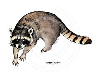 Raccoon Decal Sticker